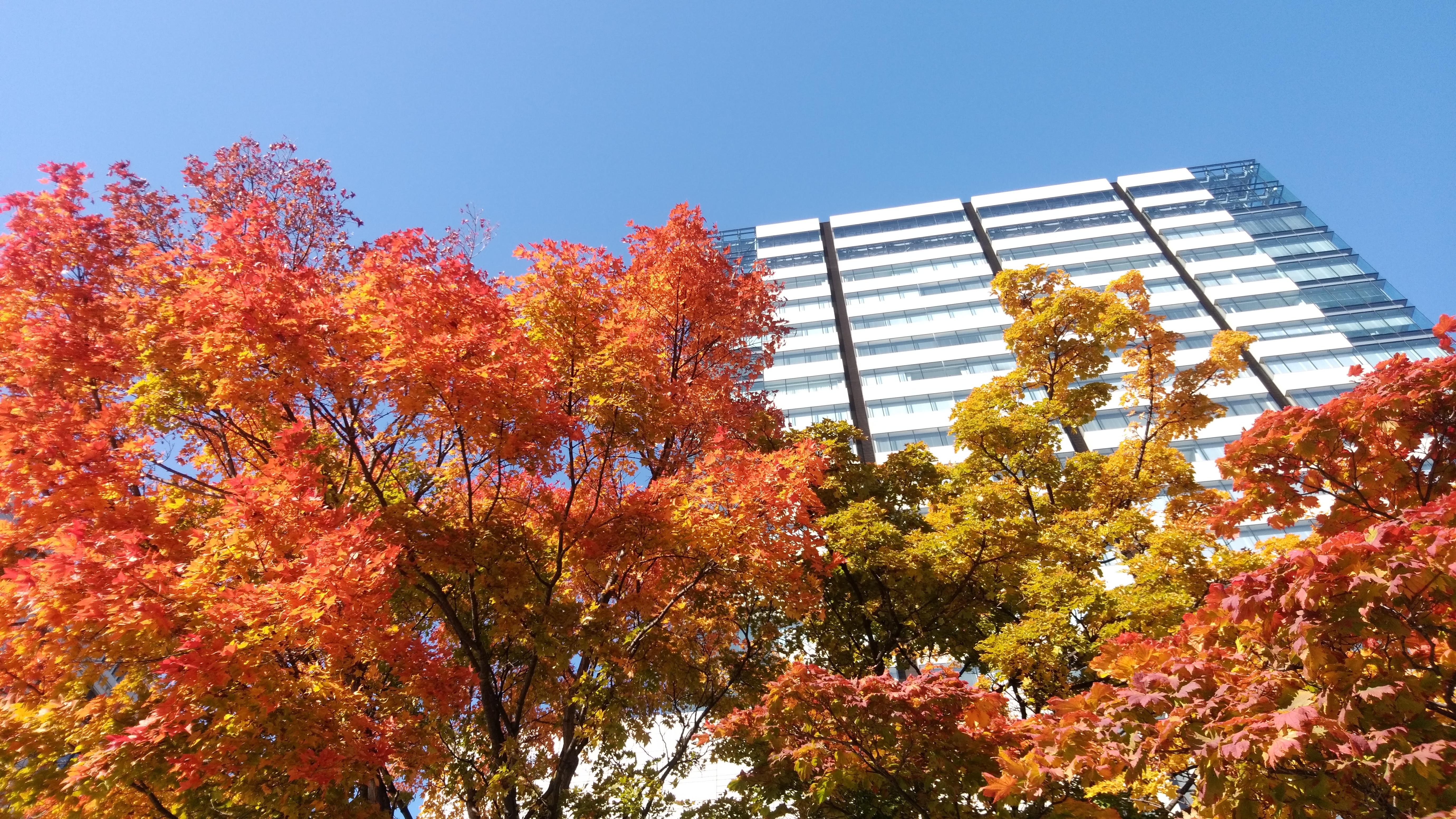 ゴージャスな秋の彩に身を委ねて〜北国から…